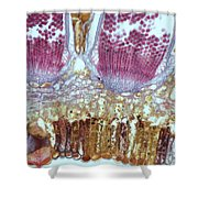 Wheat Rust Puccinia Graminis Shower Curtain