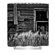 Wheat To Meet  Shower Curtain