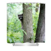 When Raccoon Dream Shower Curtain