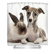 Whippet Pup With Colorpoint Rabbit Shower Curtain
