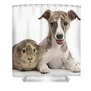 Whippet Pup With Guinea Pig Shower Curtain