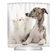 Whippet Puppy And Kitten Shower Curtain