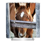 Whiskers 1 Shower Curtain