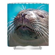 Whiskers Of A Seal Shower Curtain