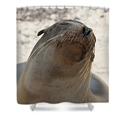Whiskers On The Face Of A Fur Seal Shower Curtain