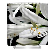 White Agapantha Shower Curtain