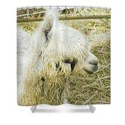 White Alpaca Photograph Shower Curtain