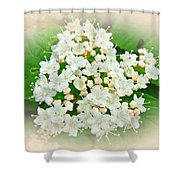 White And Cream Hydrangea Blossoms Shower Curtain