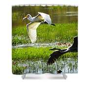White And Grey Herons In Flight Shower Curtain
