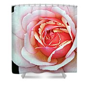White And Pink Shower Curtain