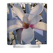 White And Pink Magnolia Shower Curtain