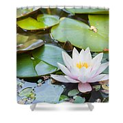 White And Pink Water Lily Shower Curtain