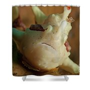 White And Red Clown Frogfish, Bali Shower Curtain by Mathieu Meur
