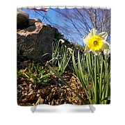 White And Yellow Daffodil Flower Shower Curtain