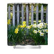 White And Yellow Daffodils Shower Curtain