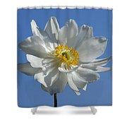 White Anemone Blue Sky Shower Curtain