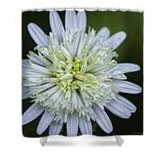 White Aster Shower Curtain