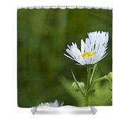 White Aster Wildflower Shower Curtain