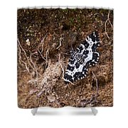 White-banded Black Moth Shower Curtain