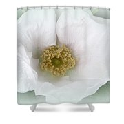 White Beach Rose - Rosa Rugosa Shower Curtain