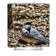 White-bellied Cuckoo-shrike Shower Curtain