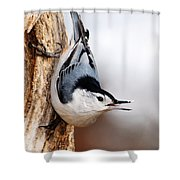 White-breasted Nuthatch 3 Shower Curtain
