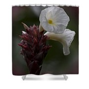 White Bromeliad Flowers Shower Curtain