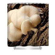 White Cloud Mushrooms Shower Curtain