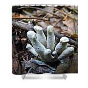 White Club Mushroom - Clavulina  Shower Curtain