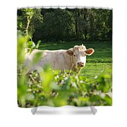 White Cow Shower Curtain