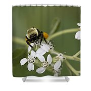 White Crownbeard Wildflowers Pollinated By A Bumble Bee With His Bags Packed Shower Curtain