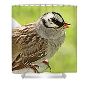 White Crowned Sparrow II Shower Curtain