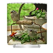 White Crowned Sparrows On The Flower Pot  Shower Curtain