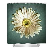 White Daisy Shower Curtain by Tamyra Ayles