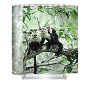White-faced Capuchins Shower Curtain