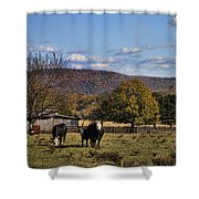 White Faced Cattle In Autumn Shower Curtain