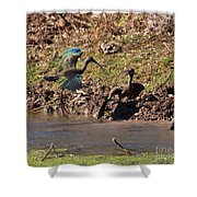 White-faced Ibis Mating Behavior In Early Spring Shower Curtain