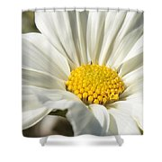 White Flower Shower Curtain by Carol Groenen