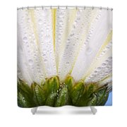 White Flower Head With Dew Shower Curtain