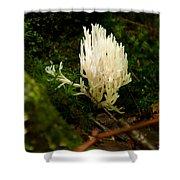 White Fungus Shower Curtain
