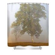 White Gum Dawn Shower Curtain by Mike  Dawson