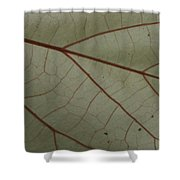 White Hau Leaf With Red Veins Shower Curtain