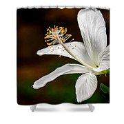 White Hibiscus II Shower Curtain