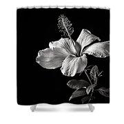 White Hibiscus Inn Black And White Shower Curtain