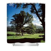 White Horse At Powerscourt, Co Wicklow Shower Curtain