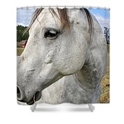 White Horse Closeup Shower Curtain