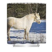 White Horse In Winter Maine Shower Curtain