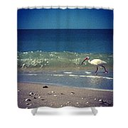White Ibis  Shower Curtain by Katie Cupcakes