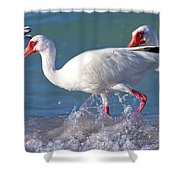 White Ibis On The Shore Shower Curtain