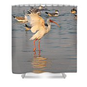 White Ibis With Wings Raised Shower Curtain